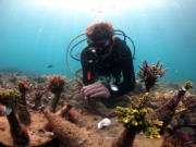 Underwater-structures---Koh-Tao-2015-(10)